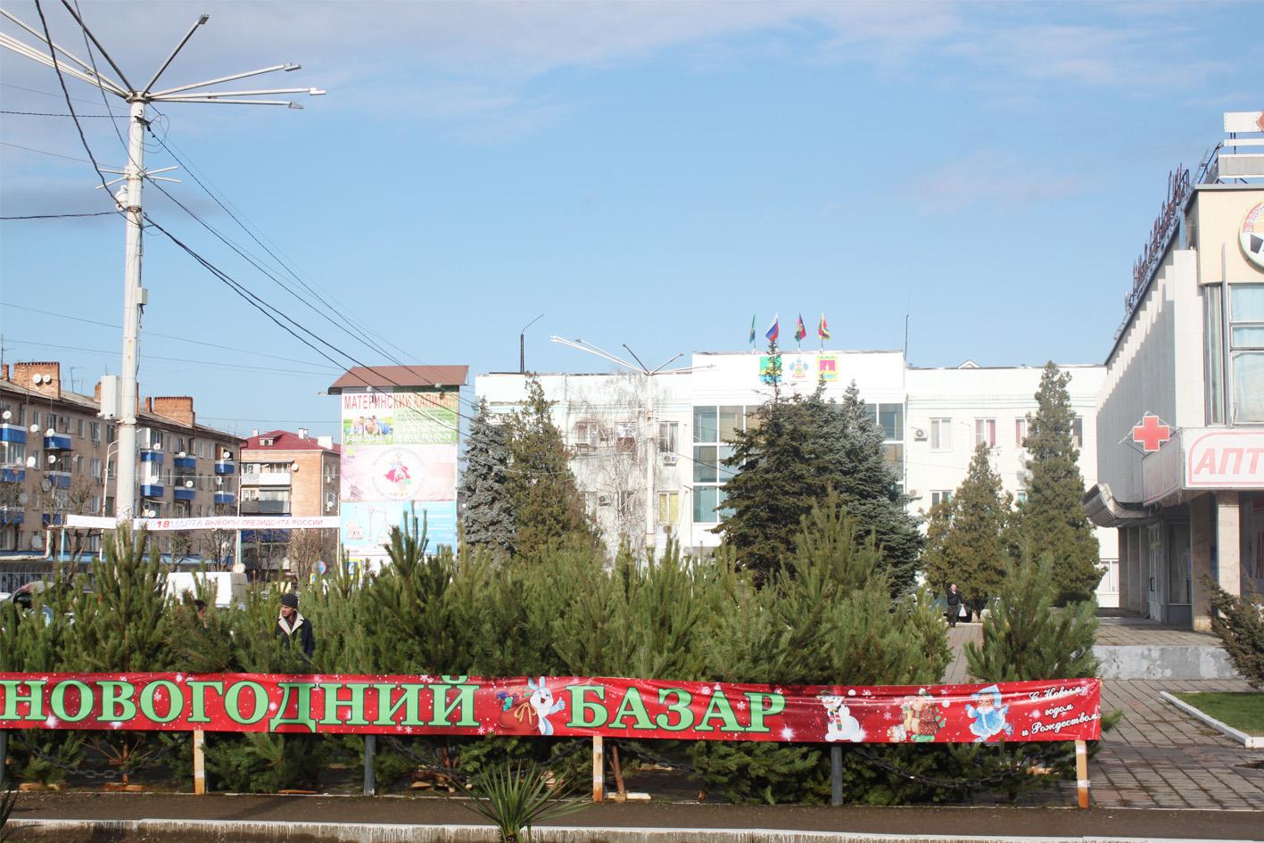 В городе Абинске идет санкционированная торговля на елочных базарах