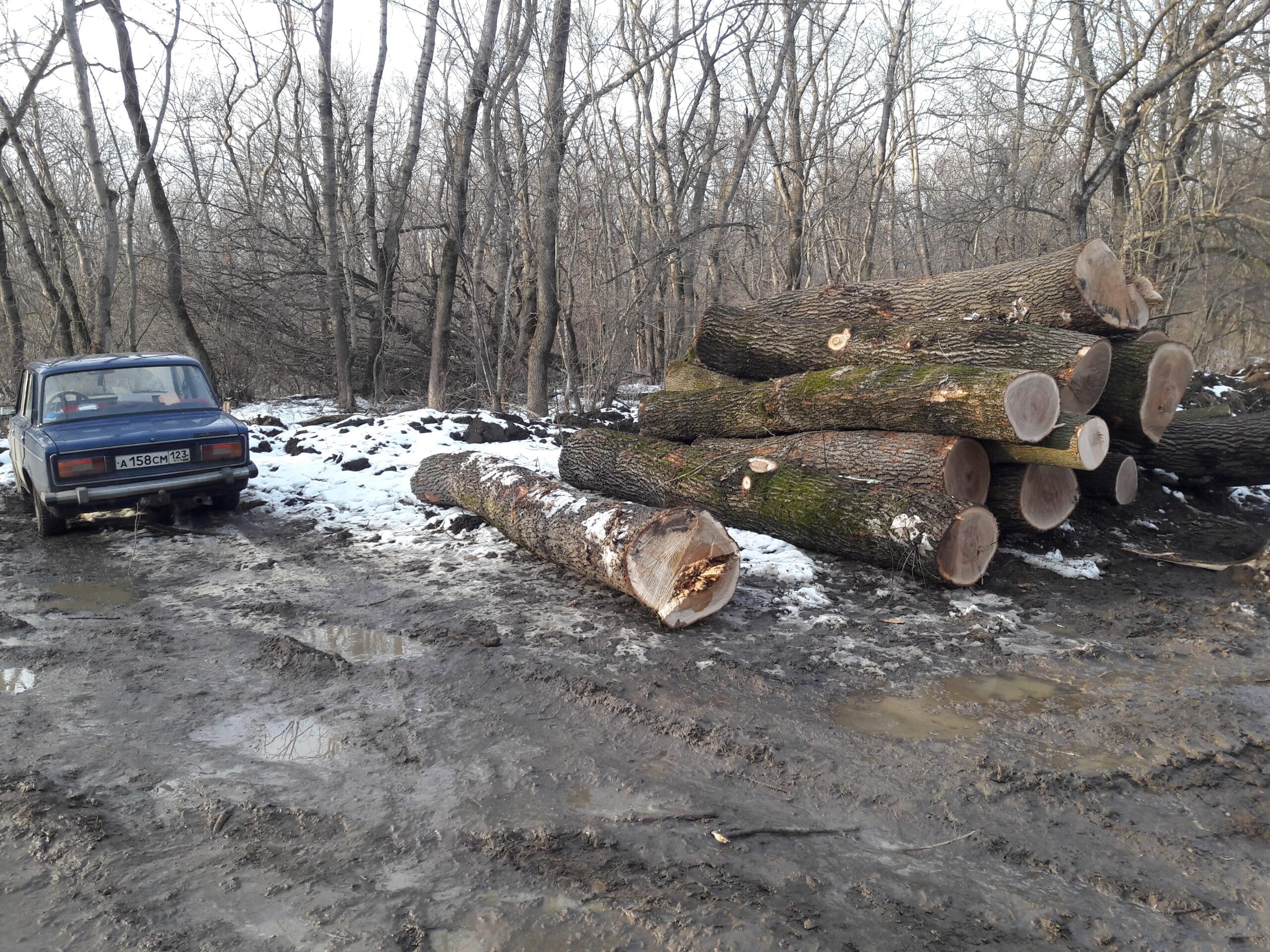 ОНФ обратился в прокуратуру Краснодарского края по факту вырубки леса в Армавире