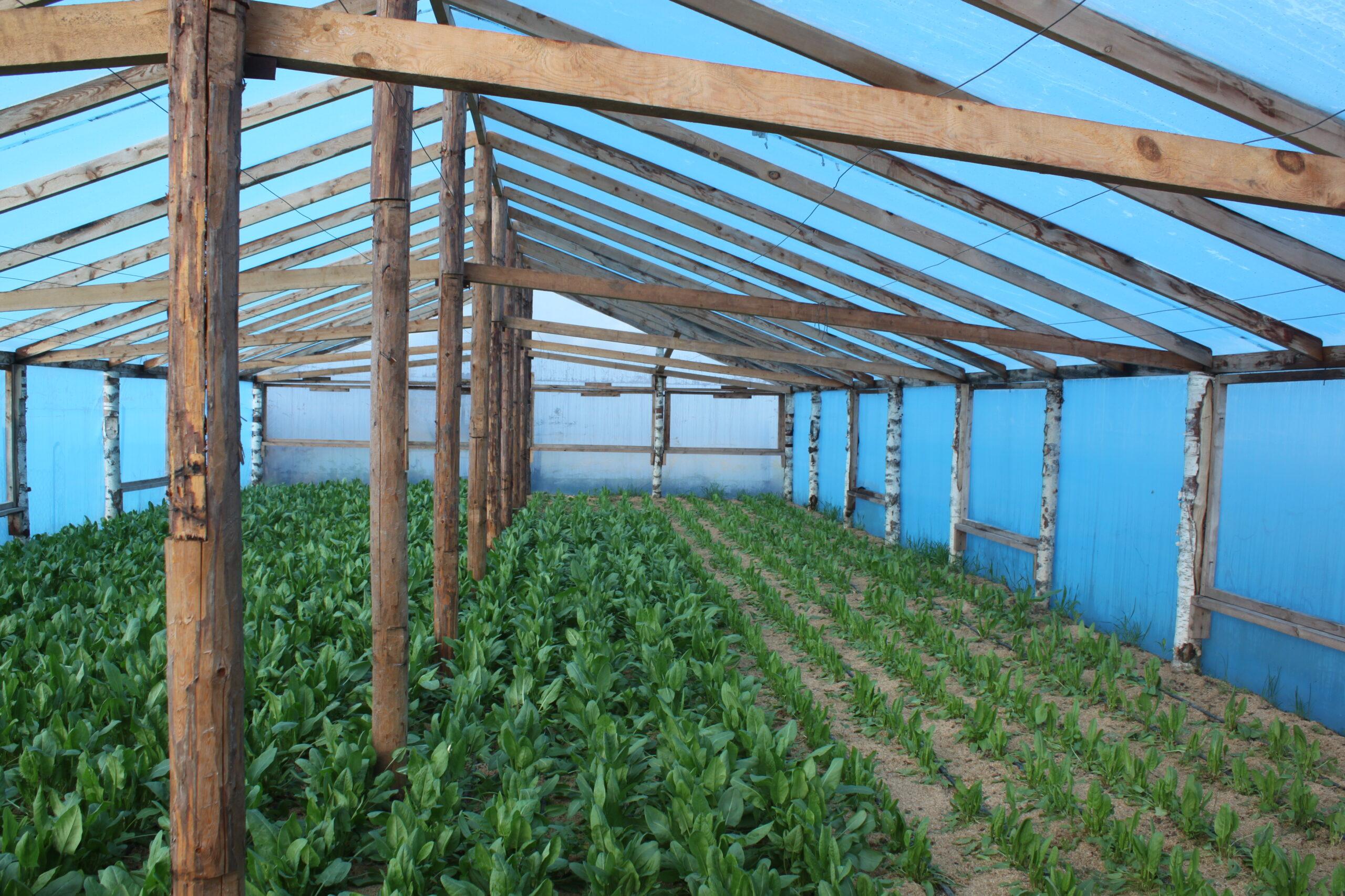 Владельцам ЛПХ и КФХ на развитие сельского хозяйства в прошлом году было выплачено субсидий на 6000,0 тыс. рублей