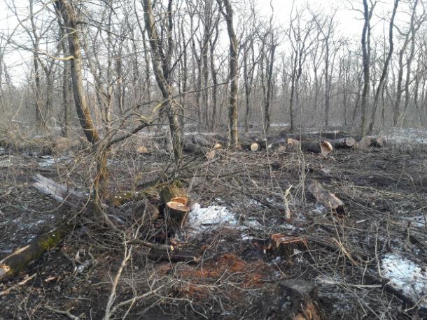 Армавирским лесам нанесён ущерб в размере более 40 млн рублей