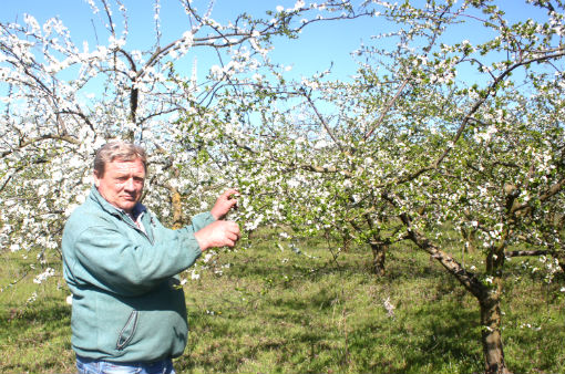 В Абинском районе в разгаре сбор урожая фруктов