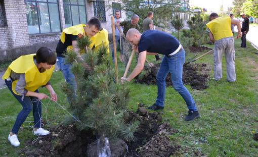 Город Абинск украсили деревья Победы