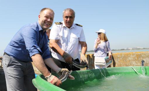 Более 3000 особей краснокнижных осетровых выпустили в реку Кубань
