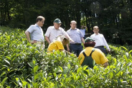Отрасль чаеводства требует внимания