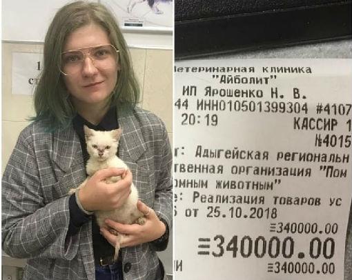 Бездомный котенок спас приют для животных в Майкопе