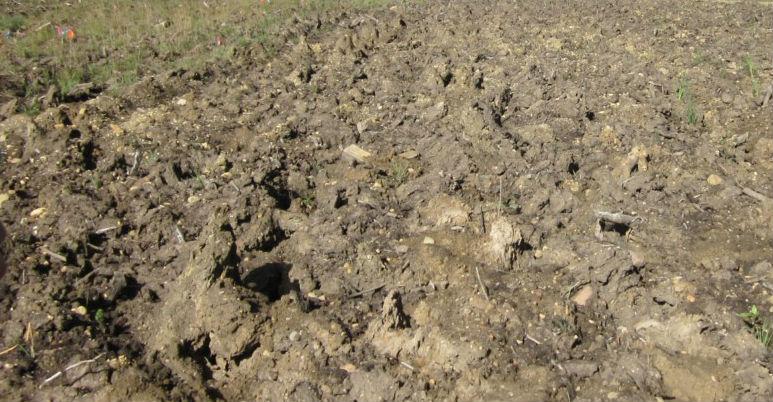 В Федоровском сельском поселении ликвидирована незаконная свалка