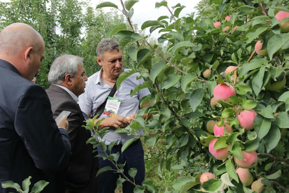 Уникальная возможность получить практический совет от ведущего садовода Кубани появилась у читателей «Восхода»