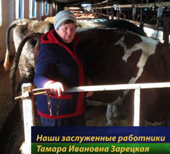 Заведующей фермой из Абинского района присвоено почетное звание «Заслуженный работник сельского хозяйства Кубани»