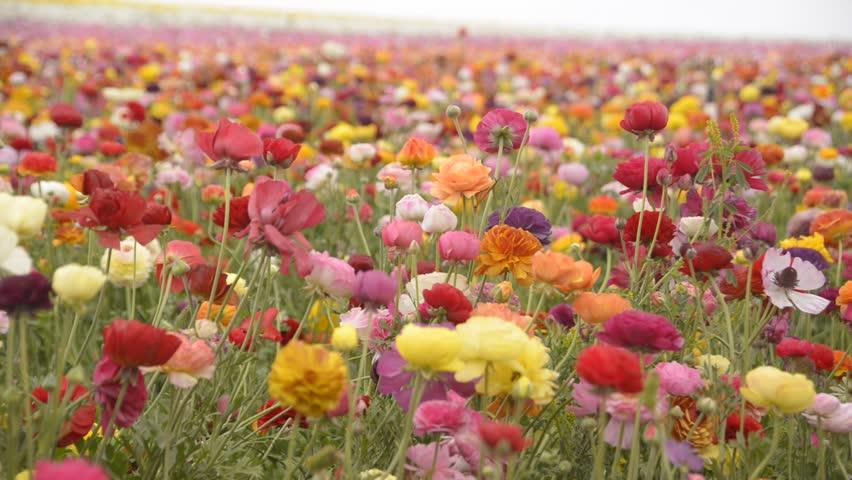 2 июня в Абинске впервые пройдет праздник цветов