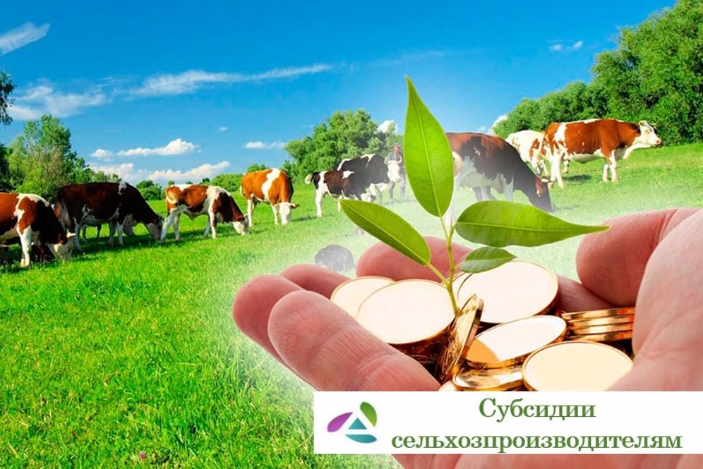 В Абинском районе идет прием документов на предоставление субсидий сельхозпроизводителям