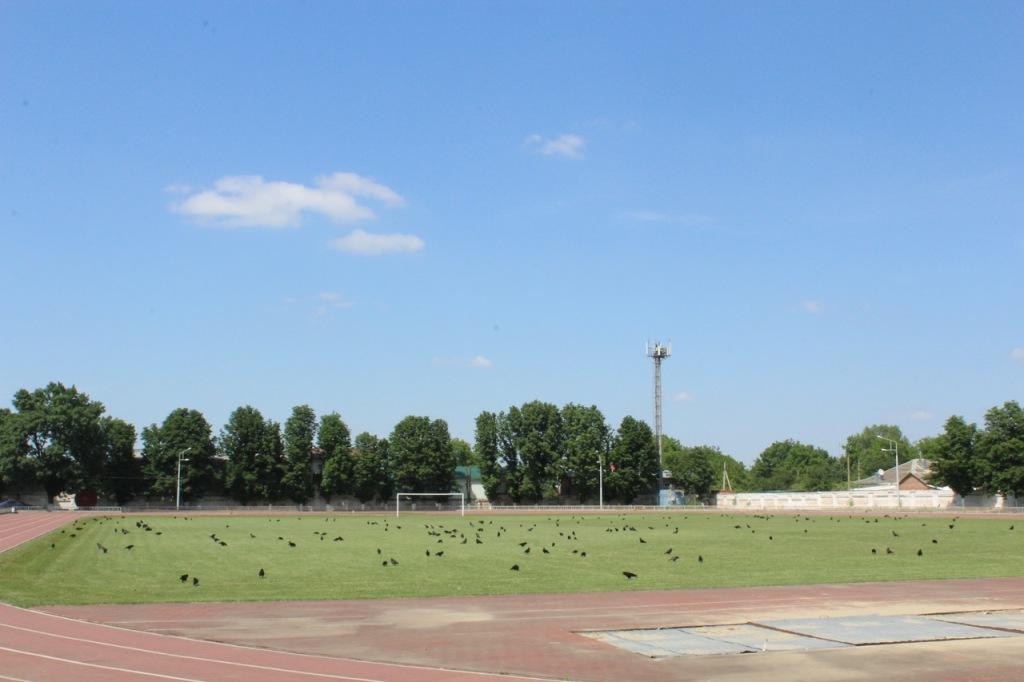 Абинский стадион атаковали вороны