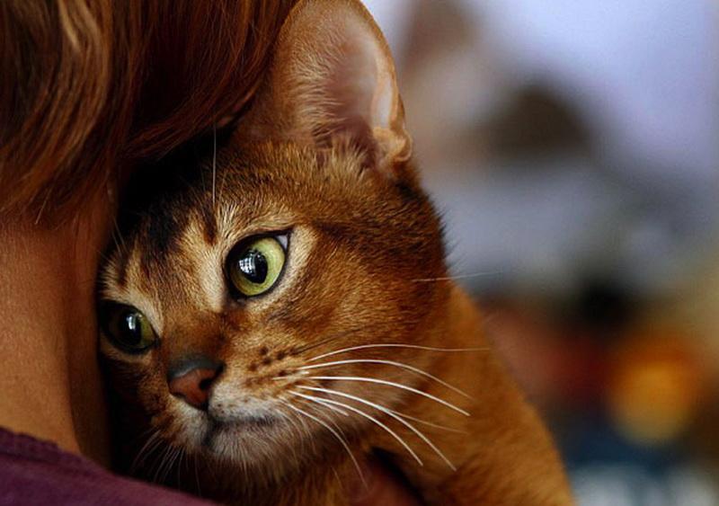 Попытка спасти кота стоила женщине жизни