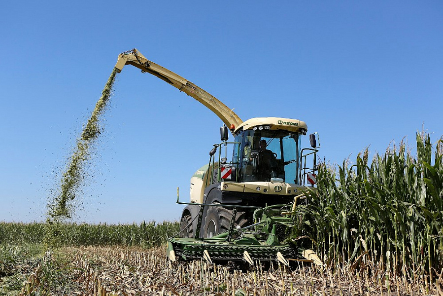 На поддержку элитного семеноводства на Кубани дополнительно направят 40 млн рублей.