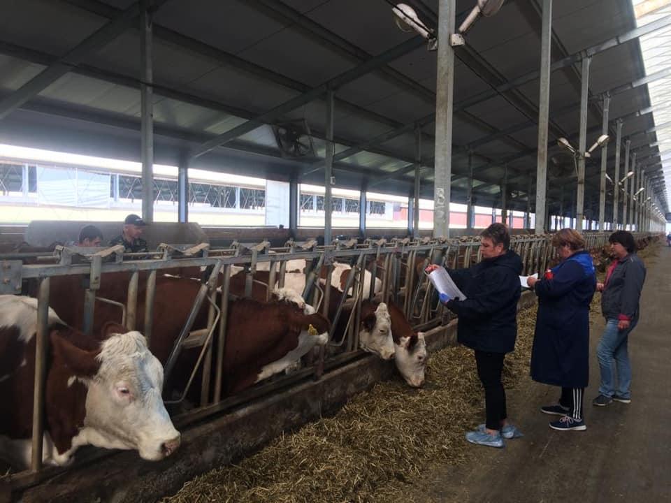 В селе Варнавинском готовятся к открытию роботизированной молочной фермы
