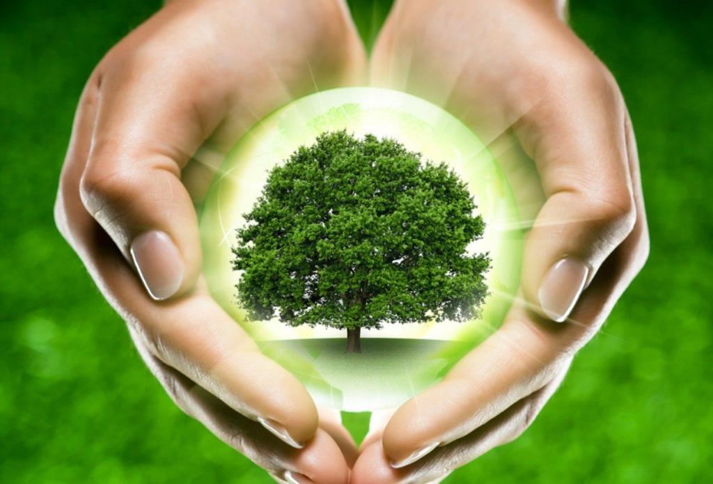 Аллеи деревьев ждут победителей экомарафона