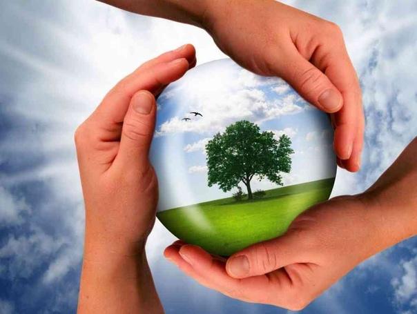 В муниципалитетах Краснодарского края стартовал эко-марафон «Сдай макулатуру – спаси дерево!»