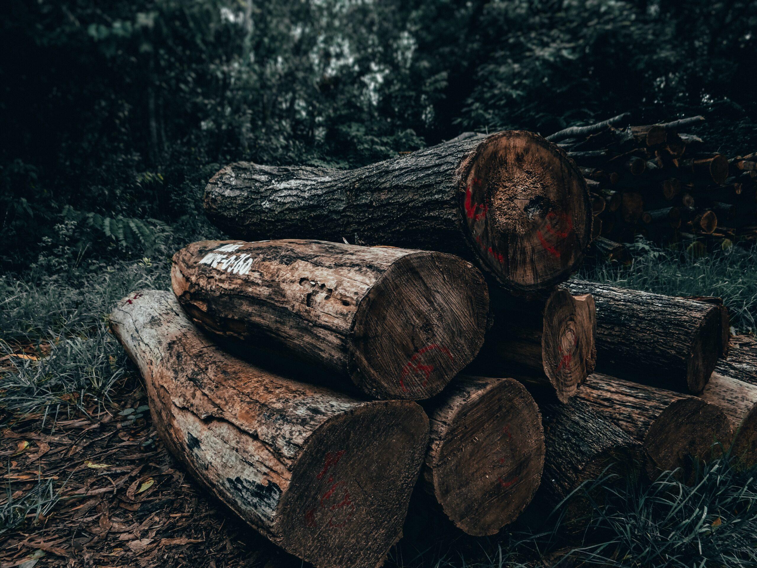 В Абинском районе задержан подозреваемый в незаконной рубке леса