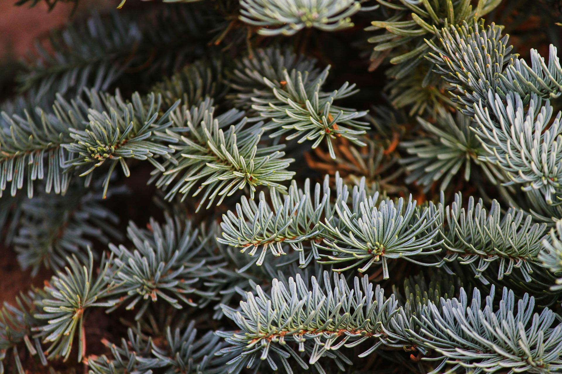 Контроль за вырубкой хвойных деревьев в лесах края будет усилен