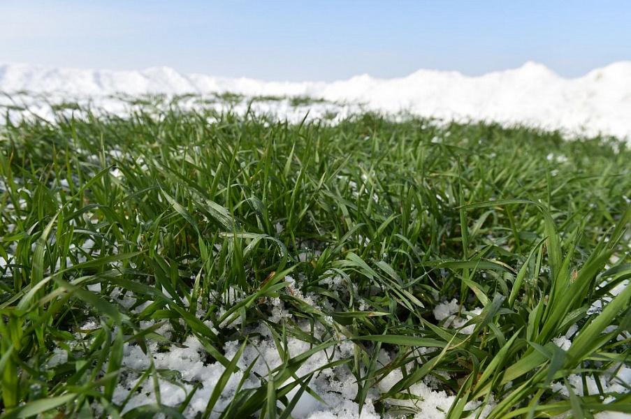 Аграрии Абинского района приступили к первой подкормке озимых культур