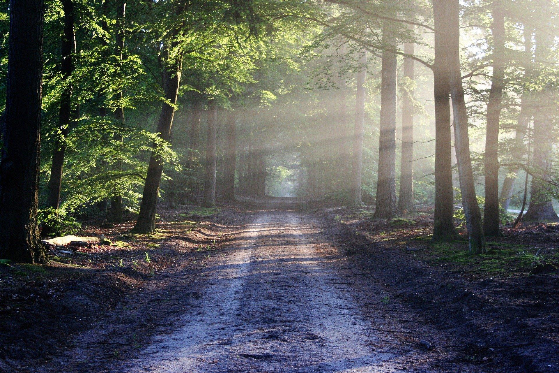 В пожароопасный период патрулировать леса будут по 80 маршрутам