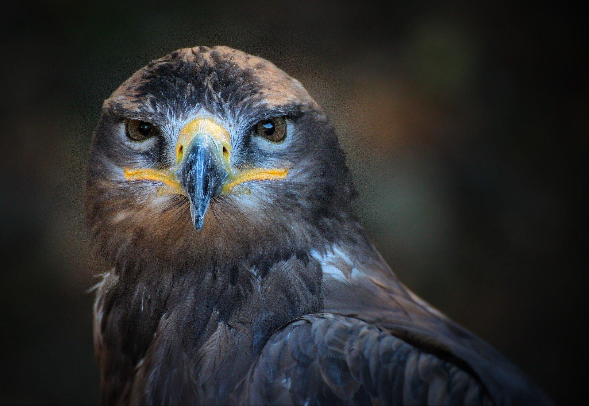 Орел больше не «сотрудничает» с фотографом